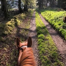 Braefield Bed and Breakfast horseback rides