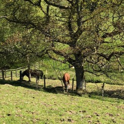 Braefield Bed and Breakfast horses