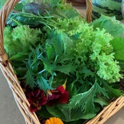 Braefield Bed and Breakfast freshly picked vegetables