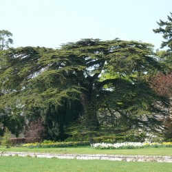 Cardross B&B trees in grounds