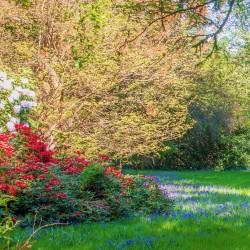 Cardross B&B gardens in springtime