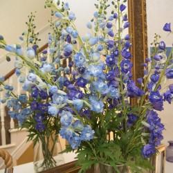 Carlton Court B&B flowers