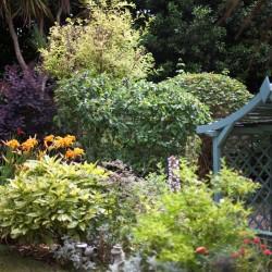 Carlton Court B&B garden