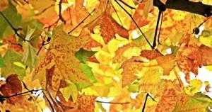 autumn 1655915 960 720