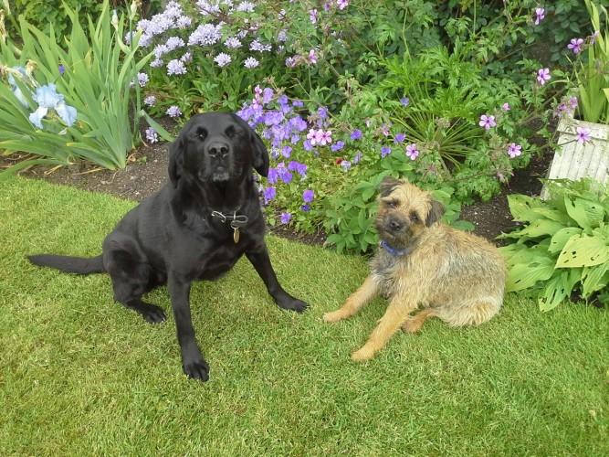 Greenhead Farm B&B resident dogs
