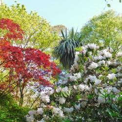 Kilmokea B&B-garden trees