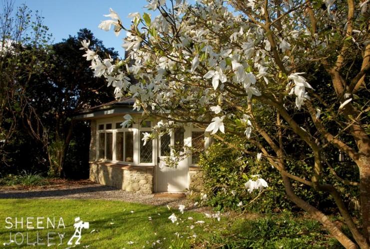 Kilmokea B&B-magnolia tree