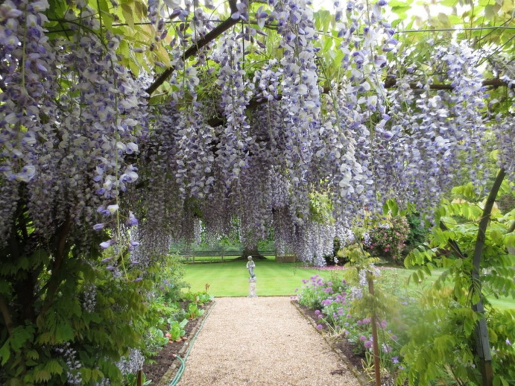 Old Whyly B&B - wisteria