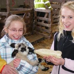 Temple House Pet Lamb