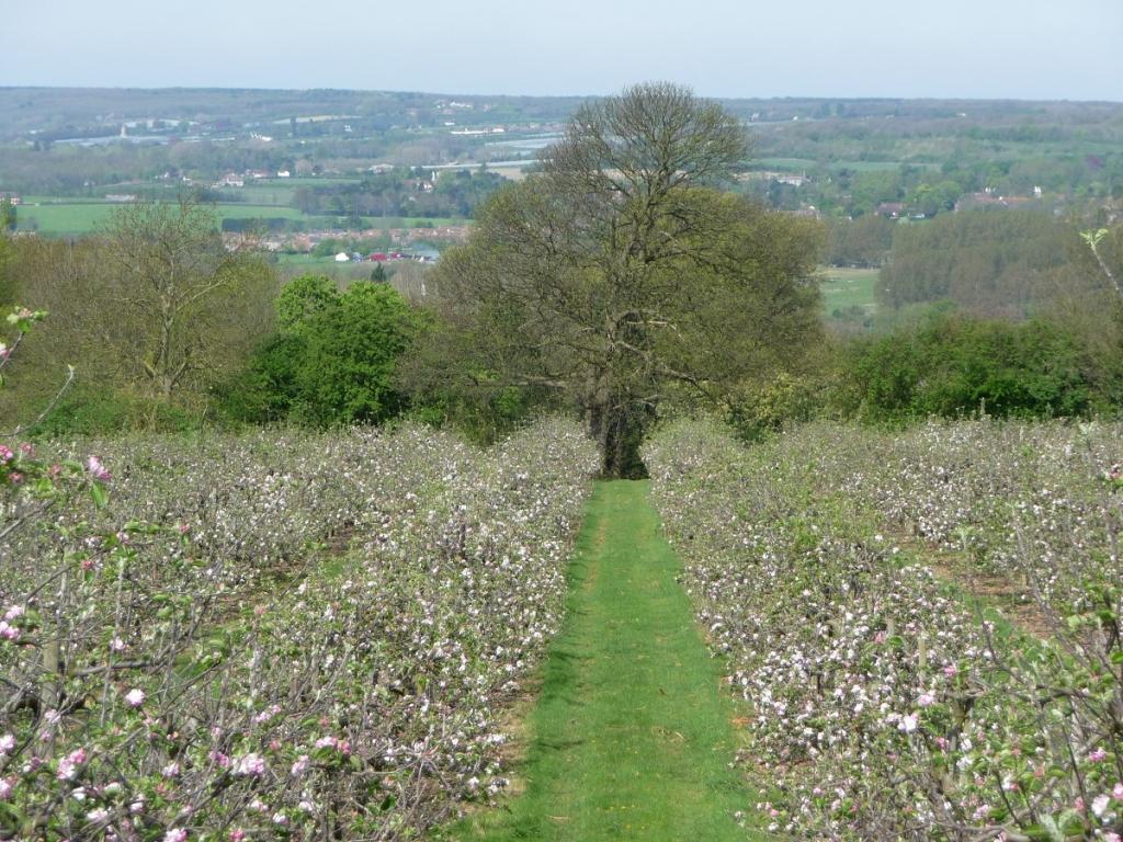 Reason Hill a Working Farm
