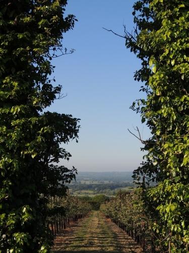 Reason Hill B&B near Maidstone