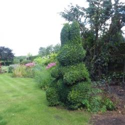 Rabbit Topiary at Horseshoe Cottage B&B