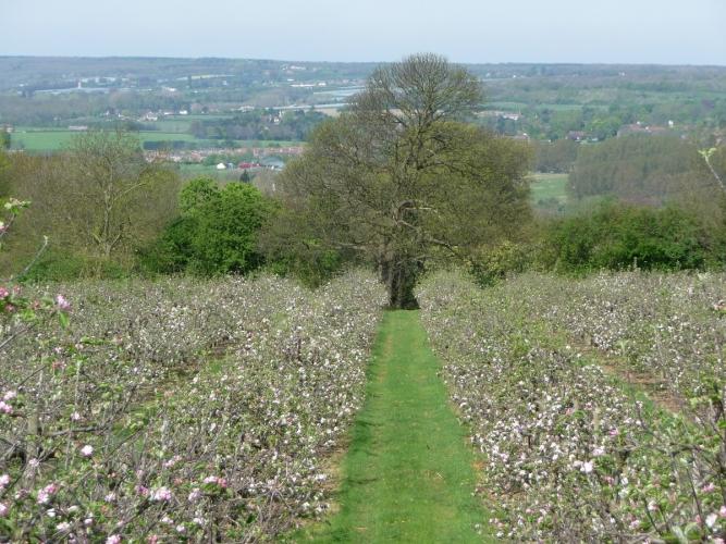 Reason Hill B&B near Maidstone vineyard