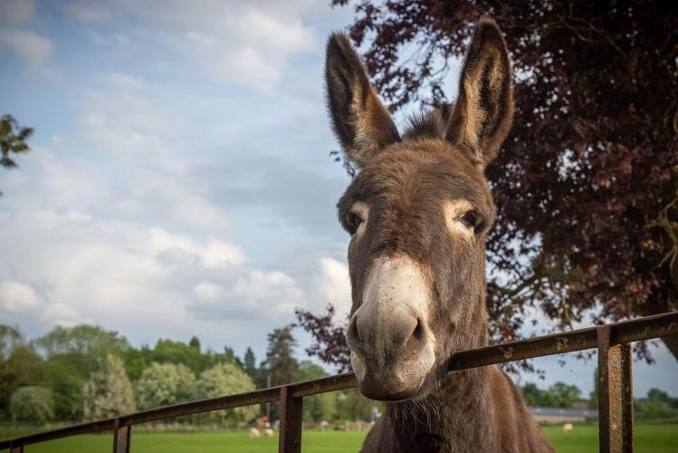 Huntlands farm donkey