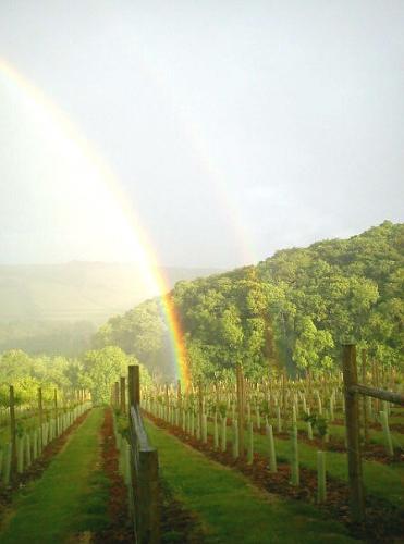 Lobhill Farm B&B -Rainbow over the vineyard
