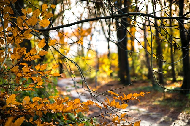 autumn-leaves-trees-staycation