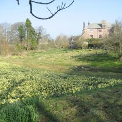 Johnby Hall distantview wild daffodi