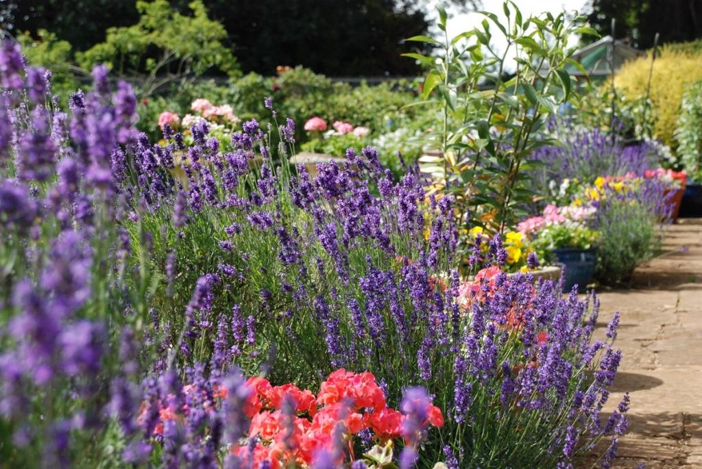 Uplands House gardens