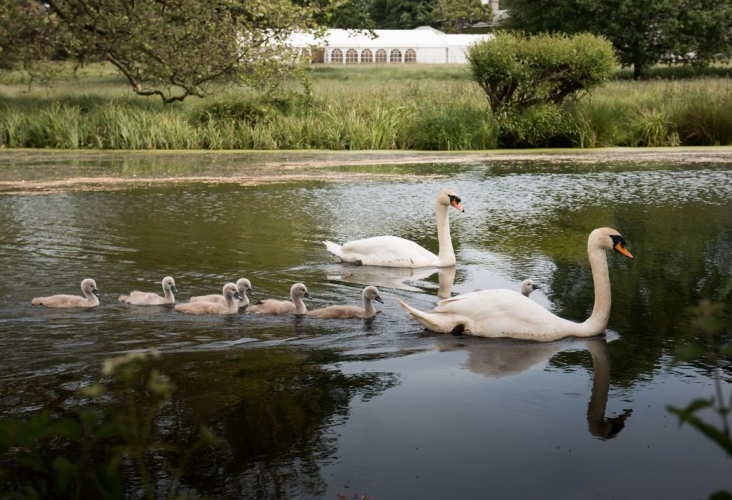 Hoveton Hall B&B swans